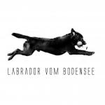© Labrador vom Bodensee